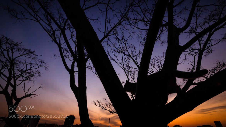Photograph Deep Darkness  by Seiji Mamiya on 500px