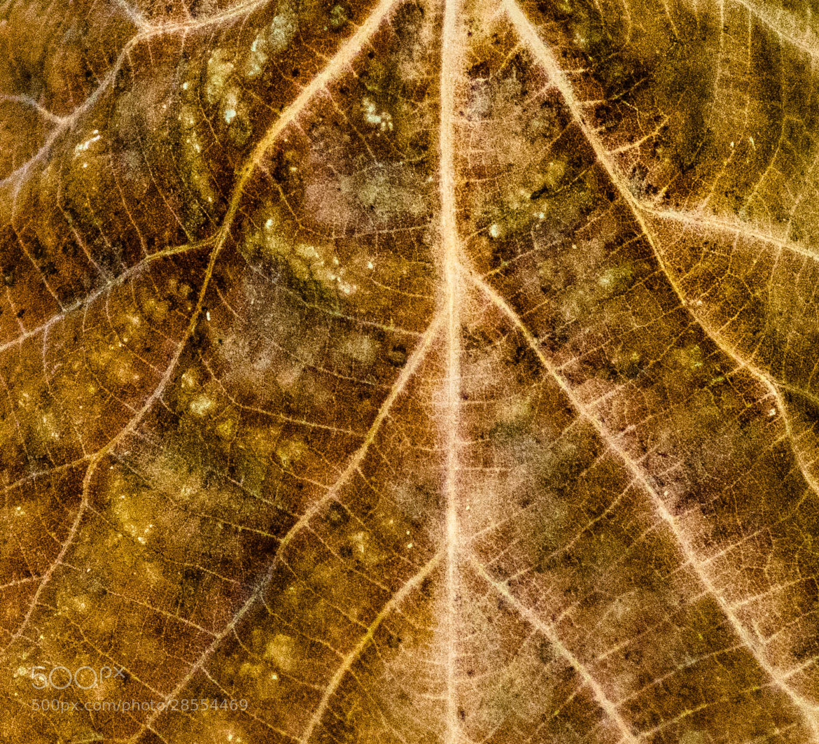 Photograph Leaf by julian john on 500px