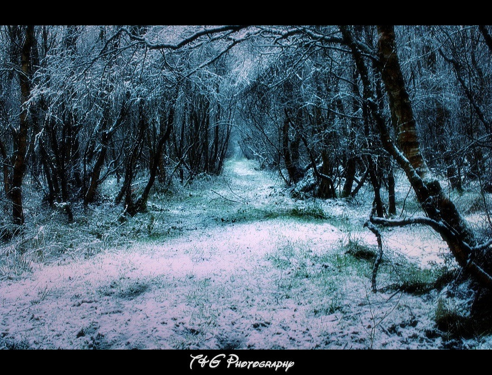 Photograph The way through by T&G Photography  on 500px