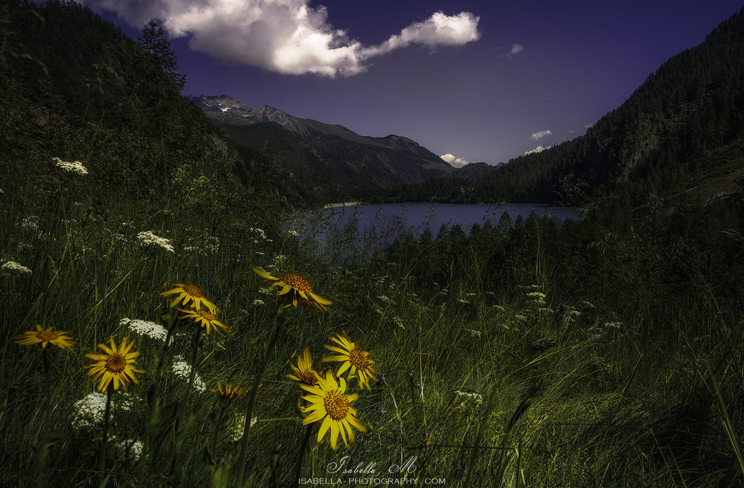 Isabella Materassi.Goodnight Daisies By Isabella Materassi 500px