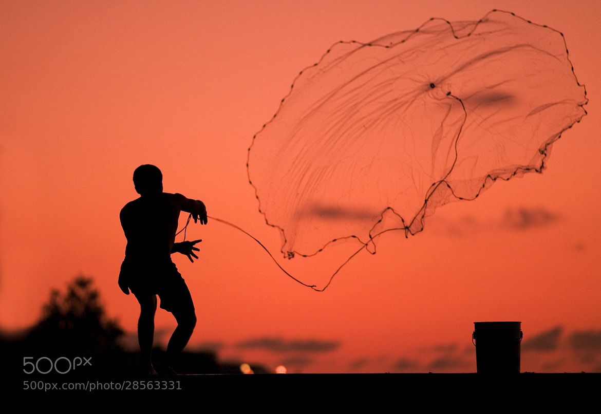 Photograph Caribbean FlyFisher by Luis Ferreiro on 500px