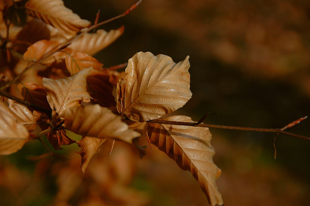 Photograph dead leaves by Sir Trauti on 500px