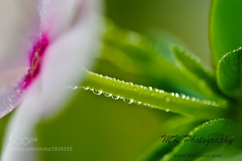 Photograph Morning Dew  by MK Photography  on 500px
