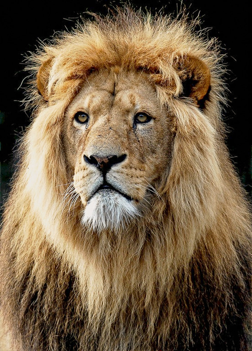 Photograph The king by Peter Hausner Hansen on 500px