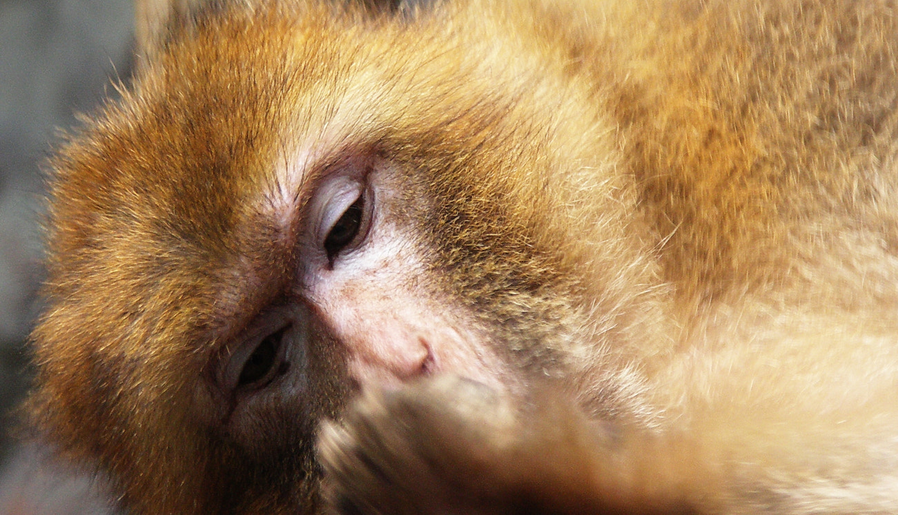Photograph Monkey bussiness by Robert Calin on 500px