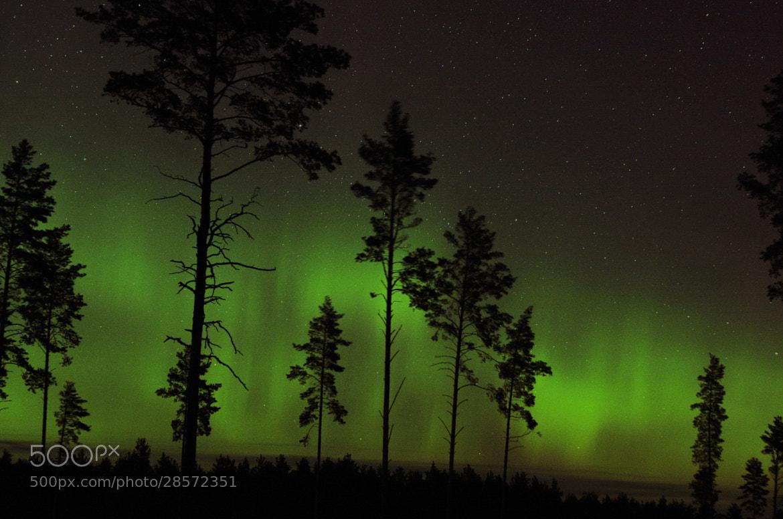 Photograph Aurora by Reigo Teervalt on 500px