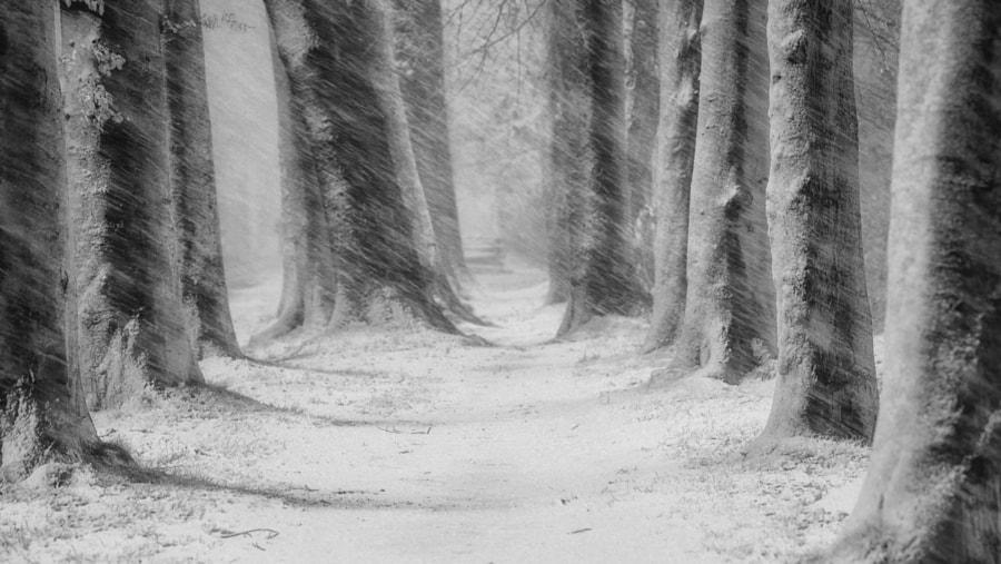 Wintertime by Saskia Dingemans on 500px.com