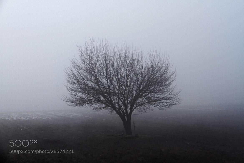 Photograph Misty Morning by Alperen Arıcan on 500px