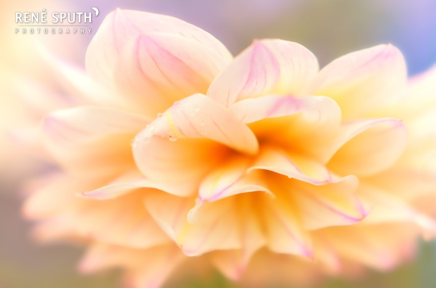 Photograph Flower by René Sputh on 500px