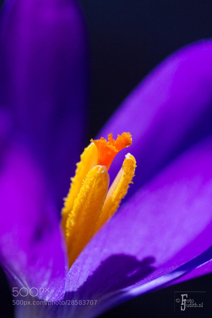 Photograph Narcis by Judith Borremans on 500px