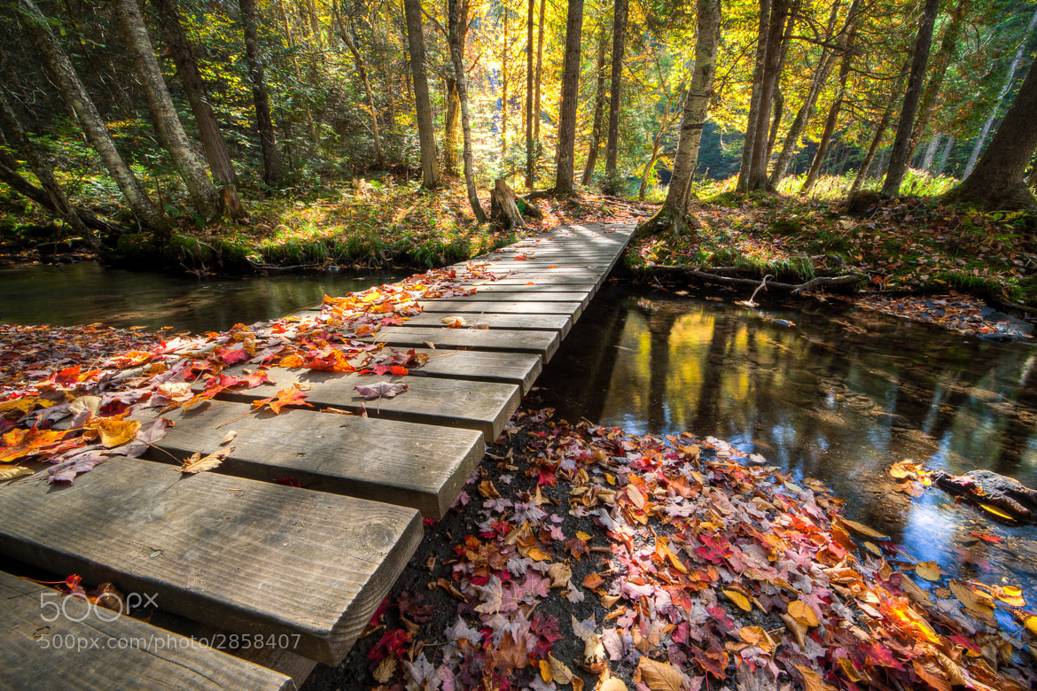 Photograph Over The River And Through The Woods by Matt Currier on 500px