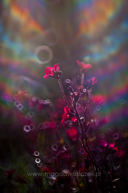 Photograph Somewhere over the Rainbow II by Magda Wasiczek on 500px