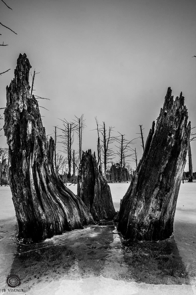 Photograph Icy stumps by Jared Blash on 500px