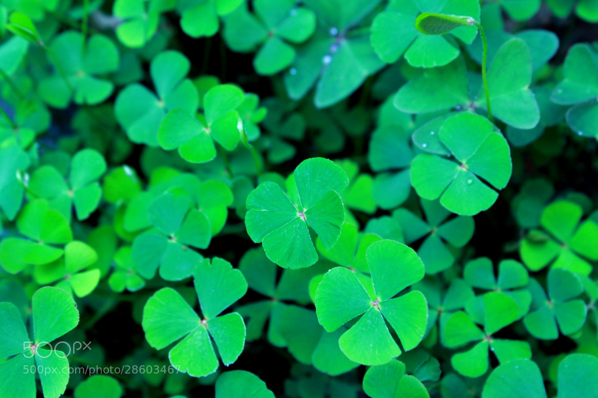 Photograph Good Luck by Rodrigo Capulleto on 500px