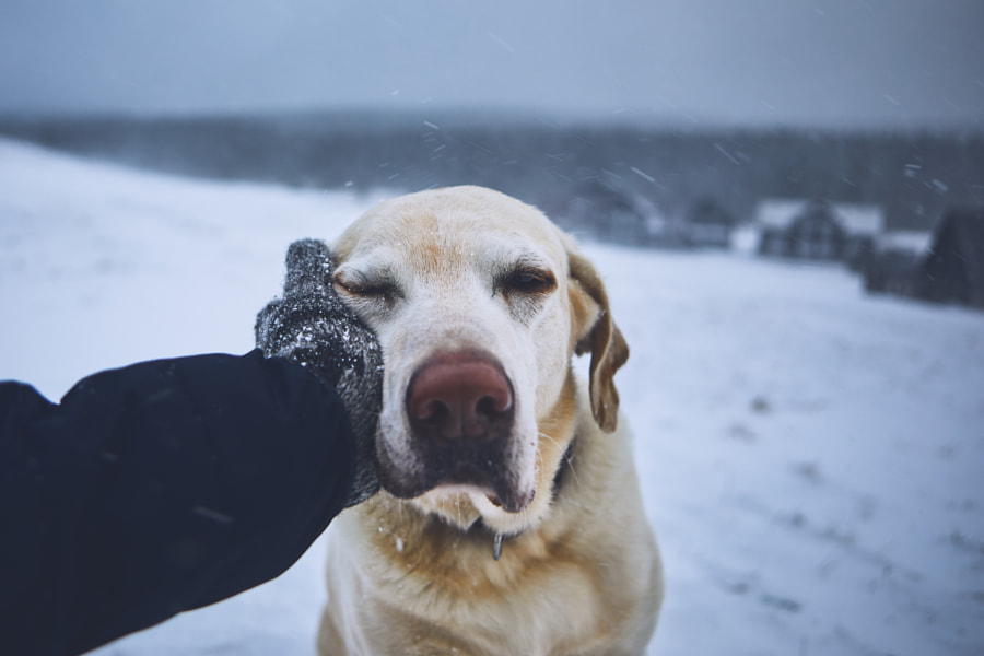 Friendship between pet owner and his dog by Jaromír Chalabala on 500px.com