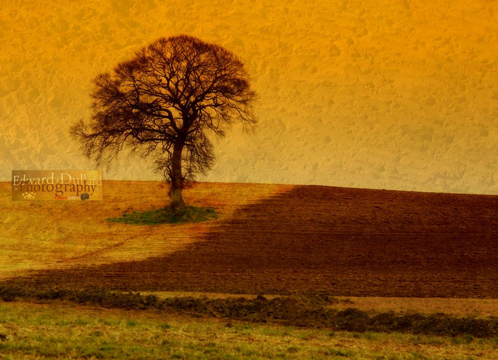 Photograph The tree at ploughing time. by Edward Dullard on 500px