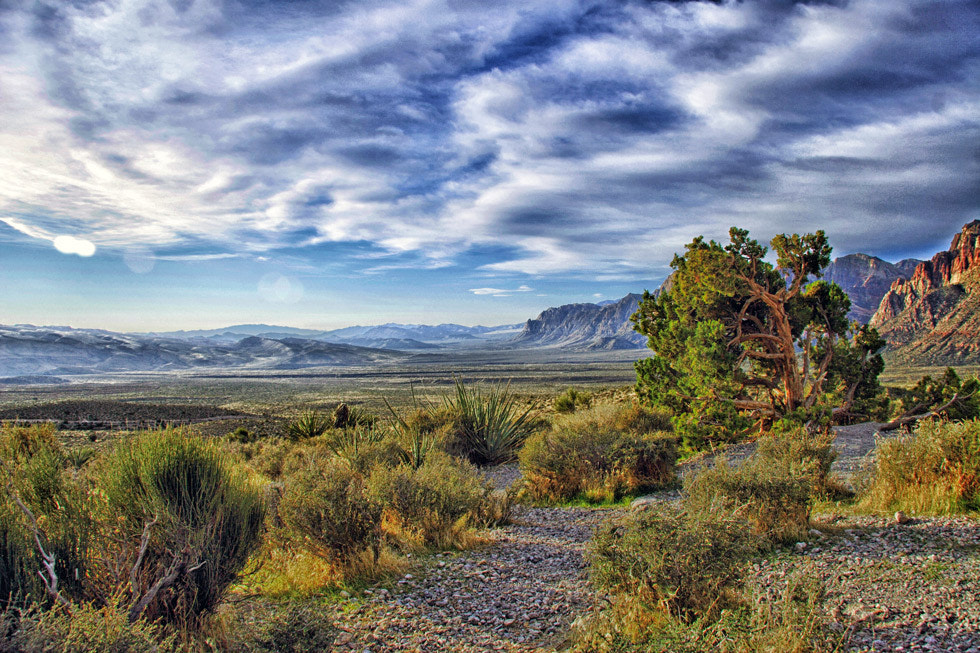 Photograph The Great Mojave Desert by Greg McLemore on 500px