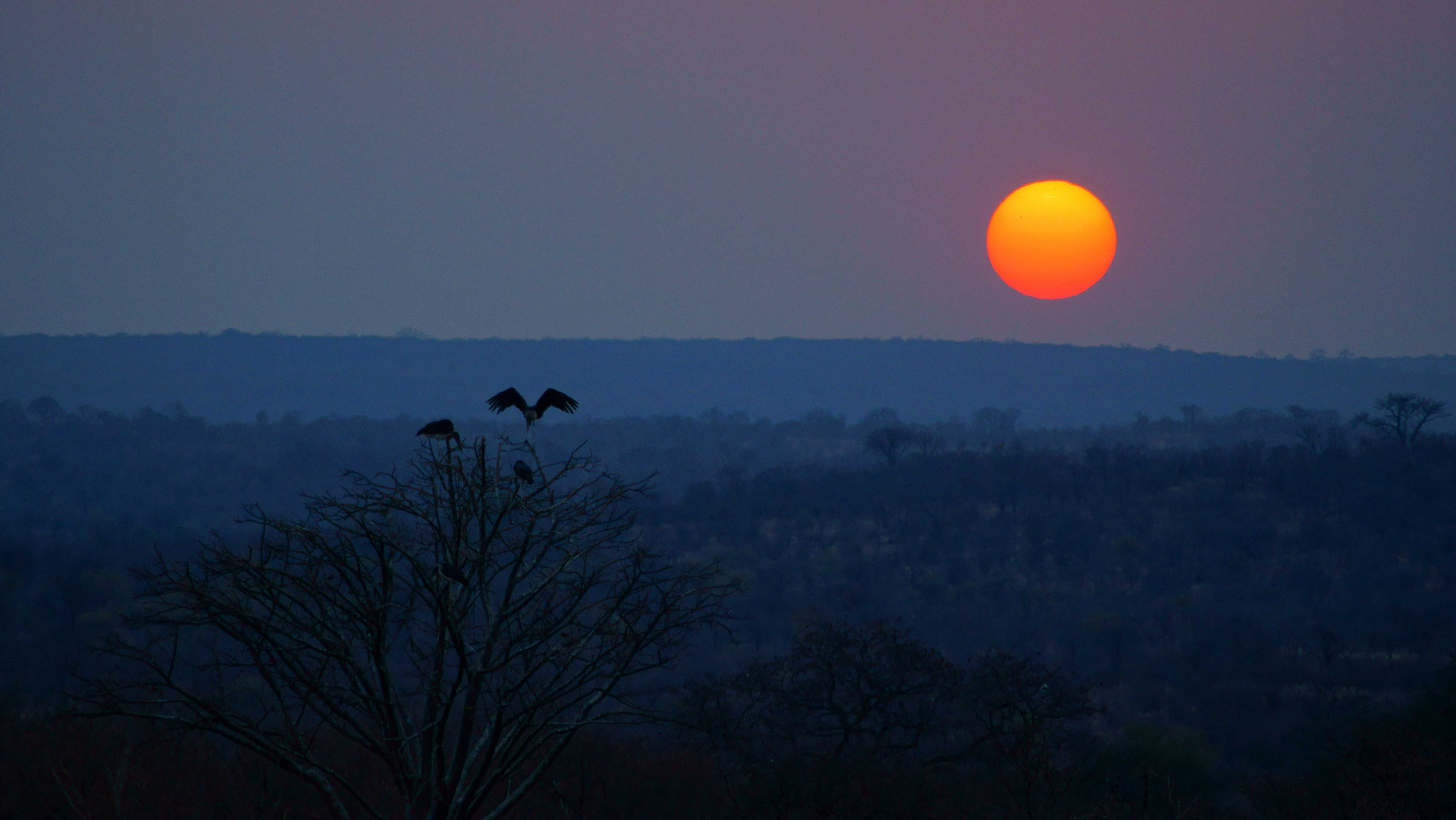 Photograph Zimbabwean Sunset by Patrick Marcoux on 500px