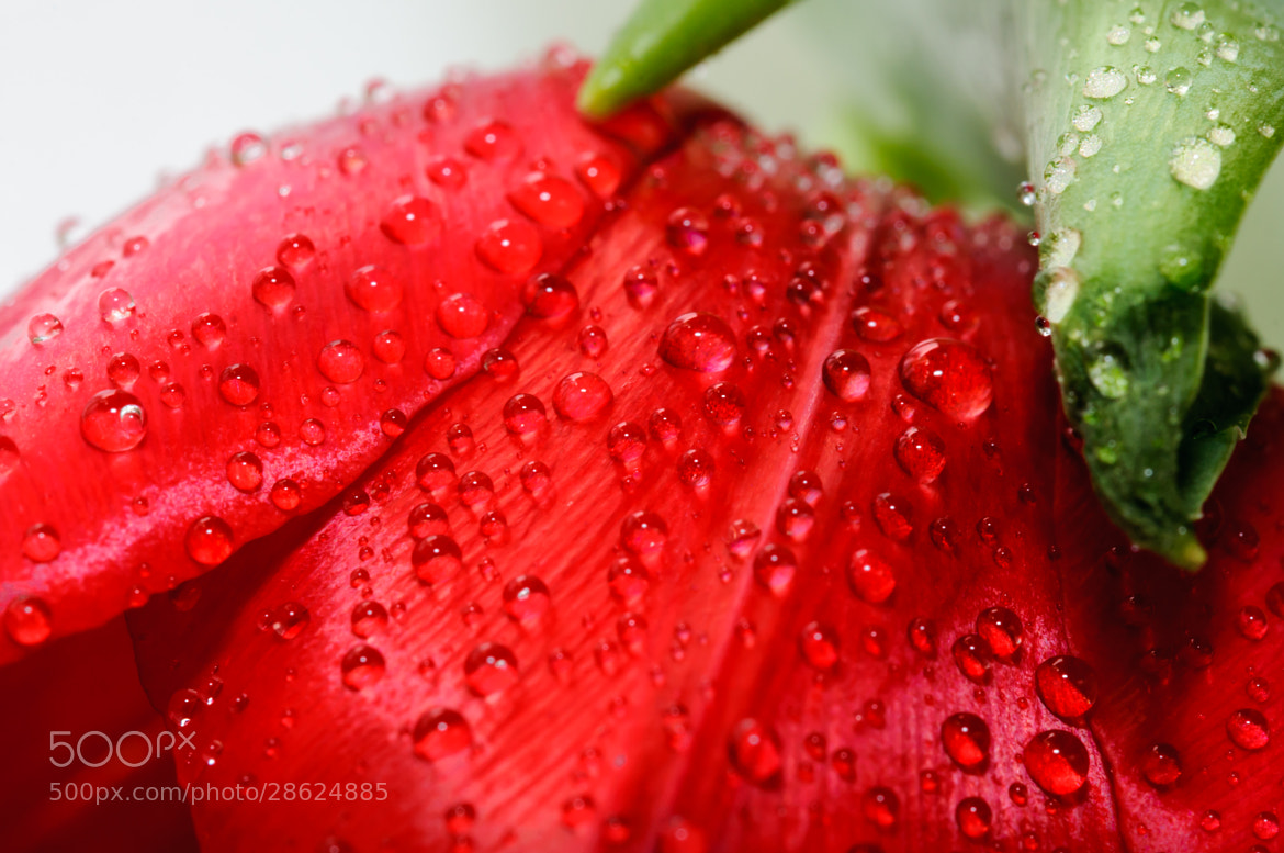 Photograph Rain drops by Ivelin Donchev on 500px
