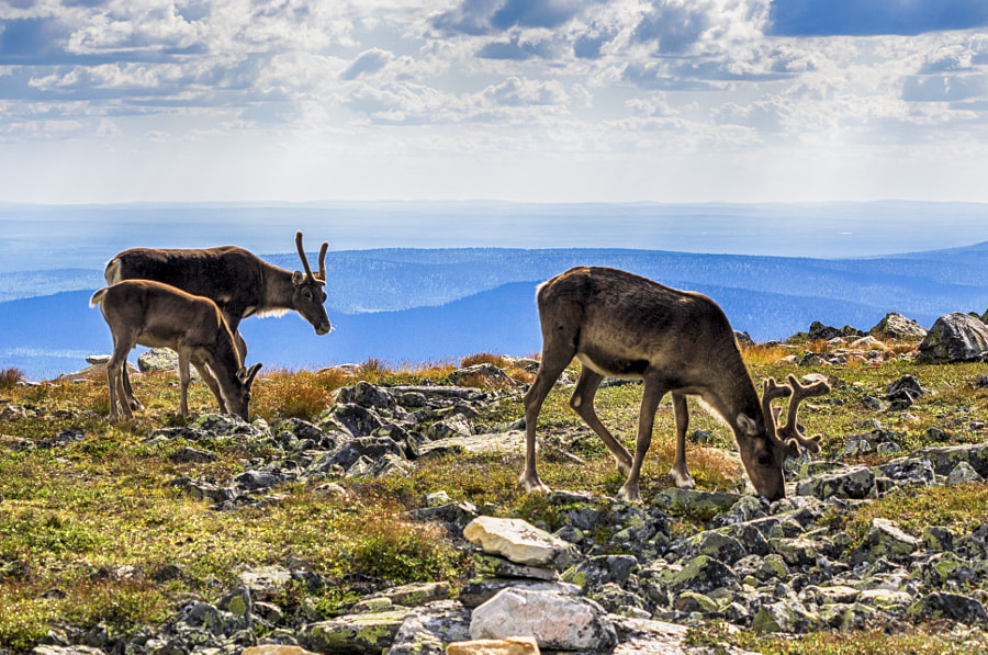 Rudolf and friends by Markus Kauppinen on 500px.com