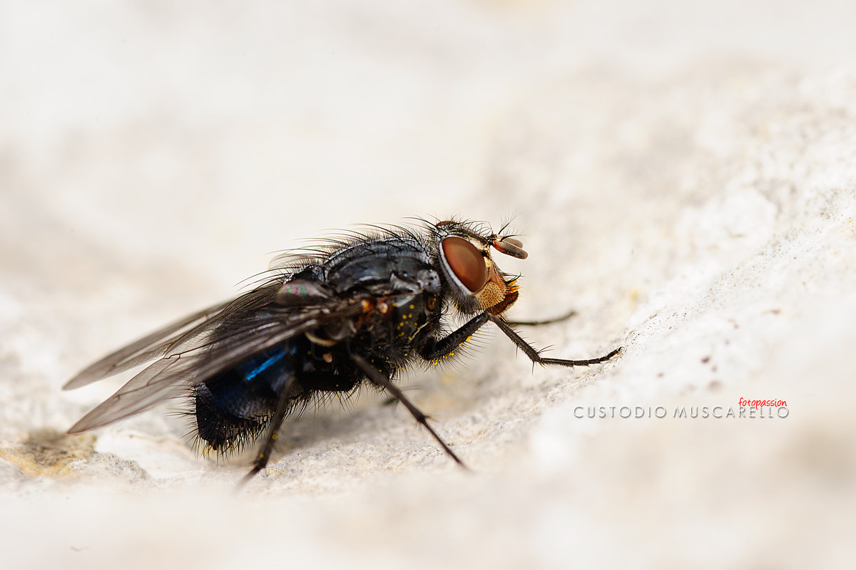 Photograph the fly by Custodio Muscarello FotoPassion on 500px