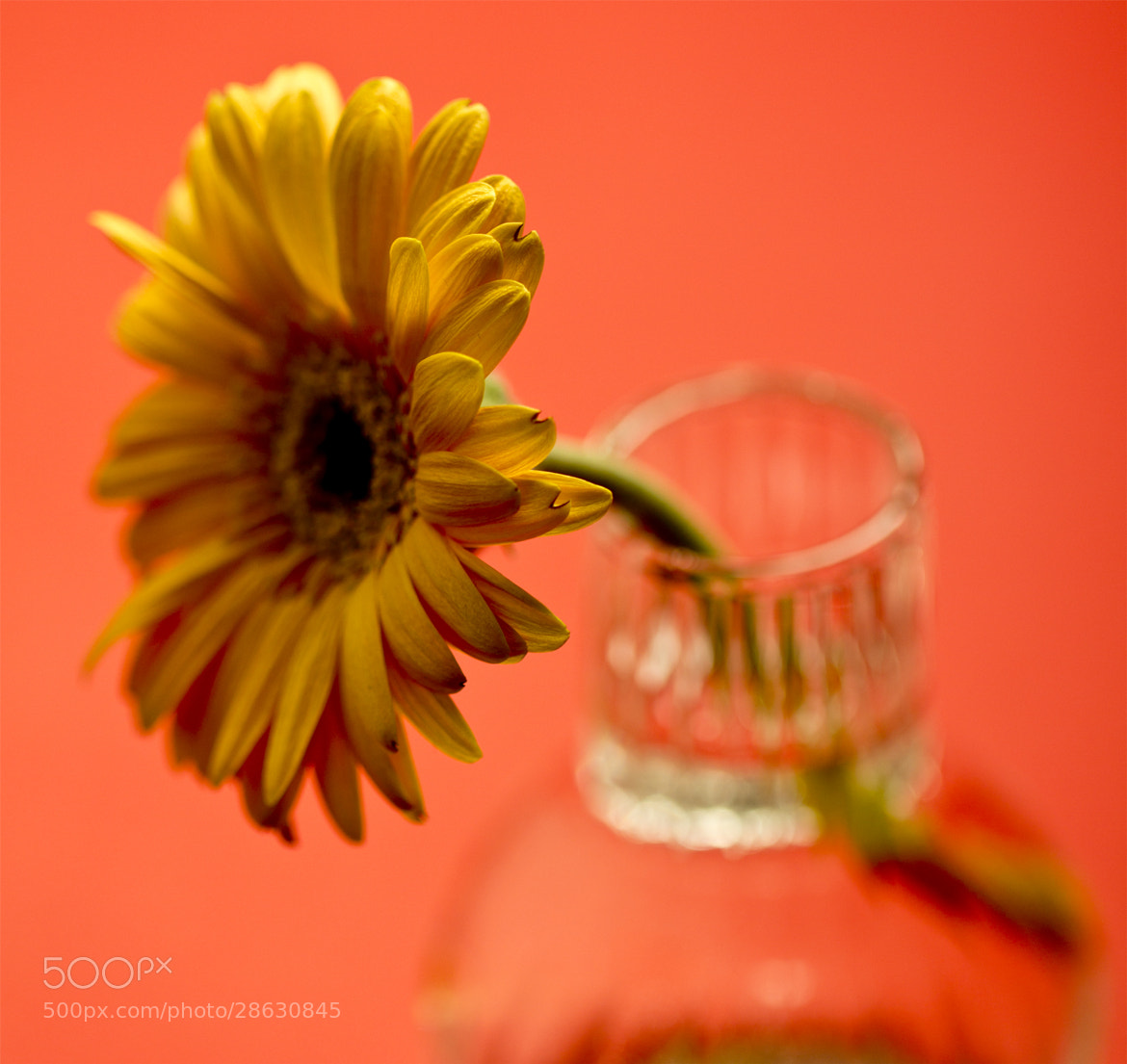 Photograph Dropdown by Jino  on 500px