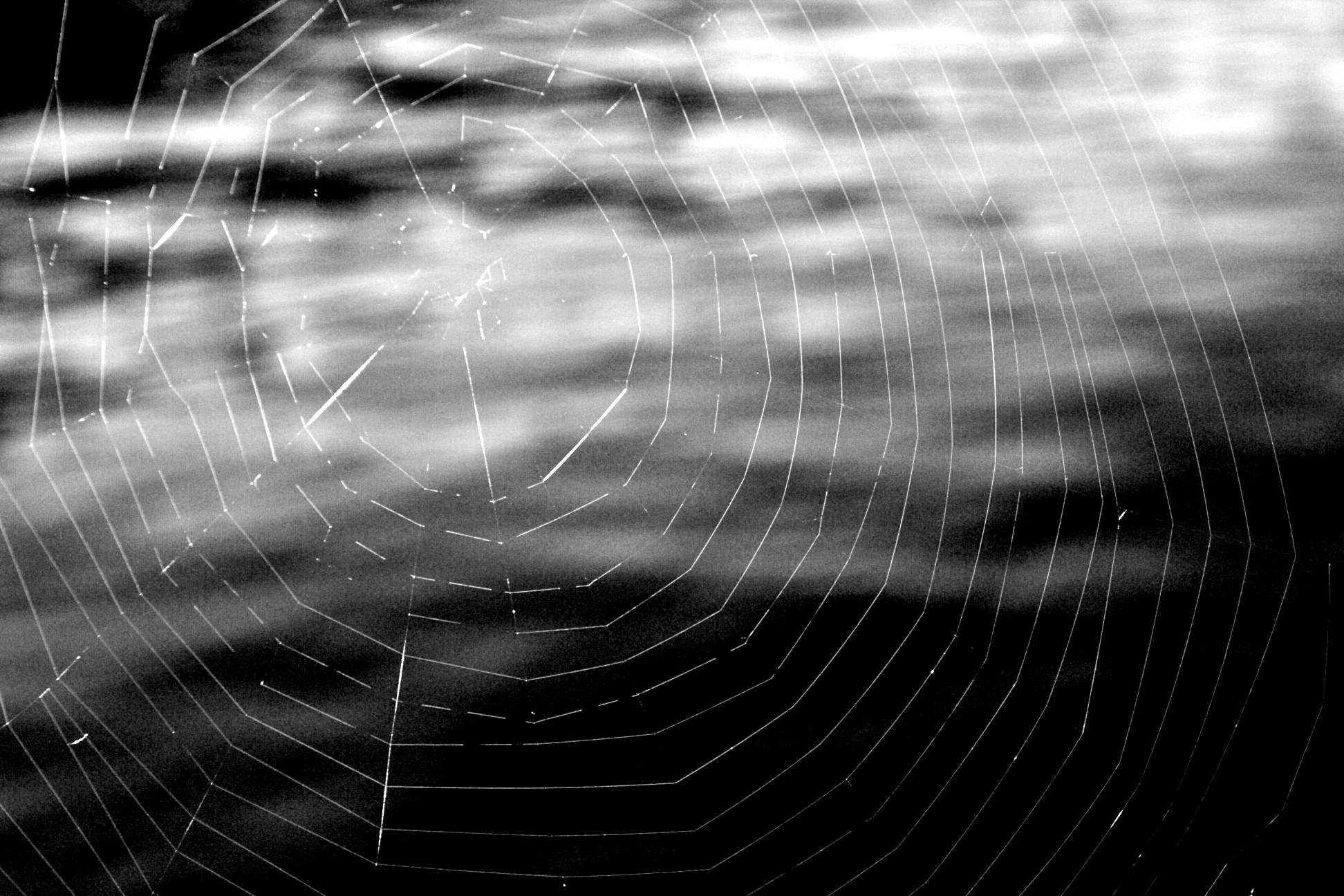 Photograph A spider made this by Rob Sentz on 500px