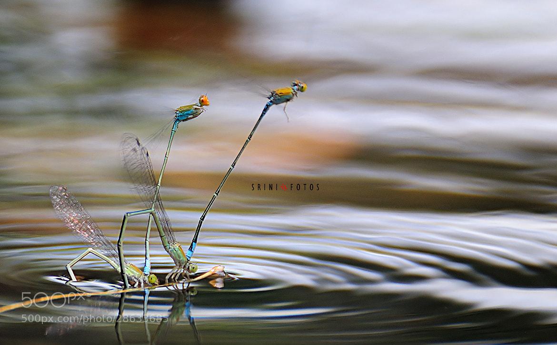 Photograph Hooked... by Srinivas Dhulipala on 500px