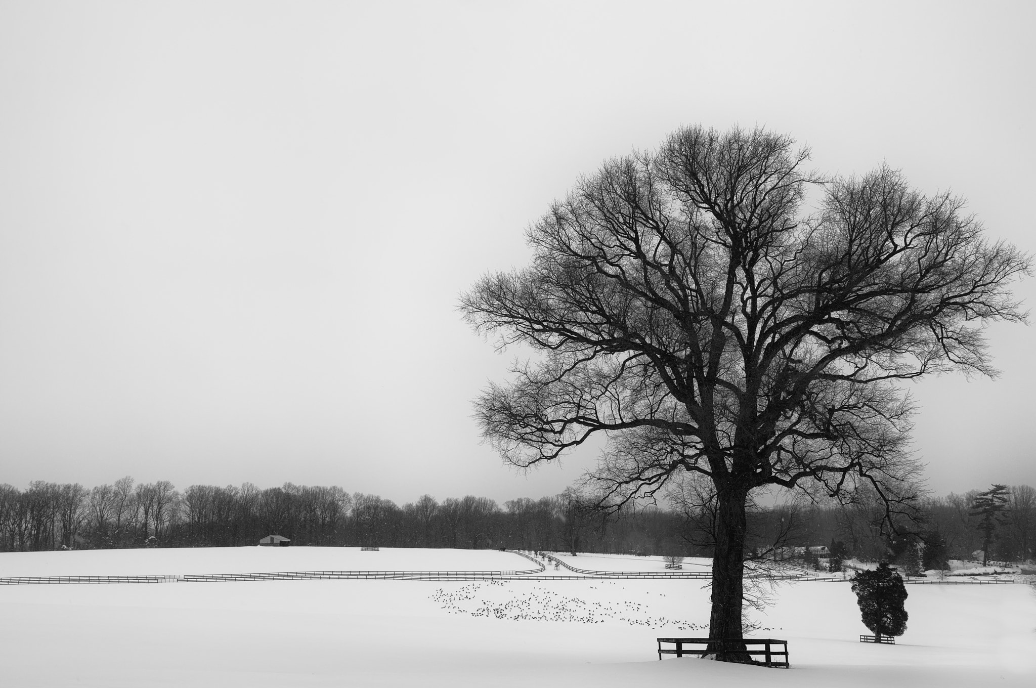 Photograph Winter Tree by Dale Keiger on 500px