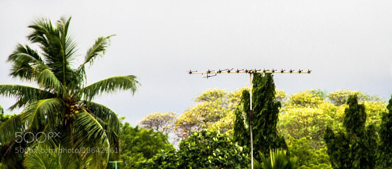Photograph green by Rason Rh on 500px