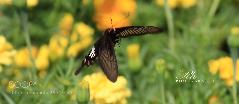 Photograph fly by Rason Rh on 500px