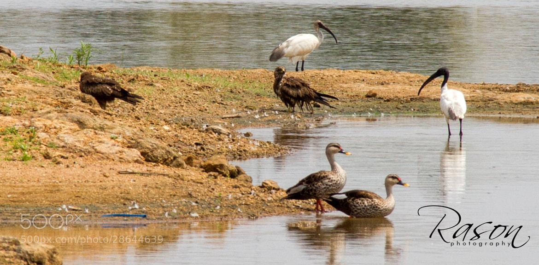Photograph Birds by Rason Rh on 500px