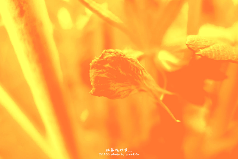 Photograph  油菜花,春逆袭景!  by eecsky on 500px