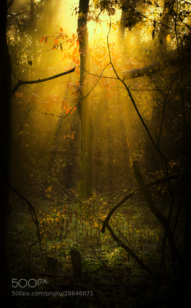 Photograph Through the forest by Andy 58 on 500px