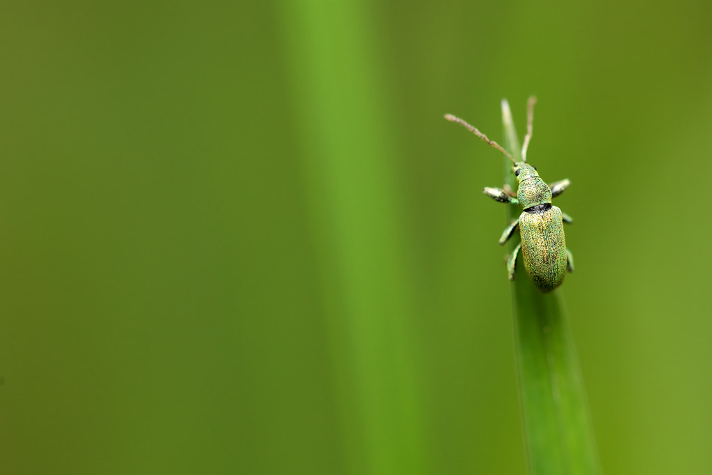 Photograph just green by Mark Bridger on 500px
