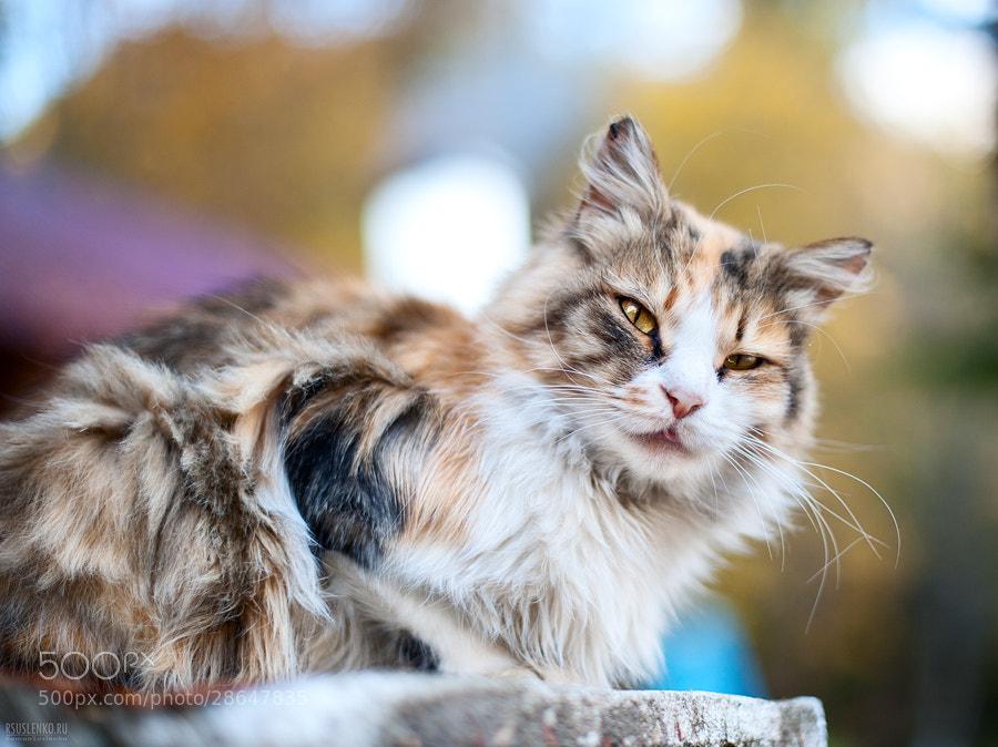 Photograph Strange cat by Roman Suslenko on 500px