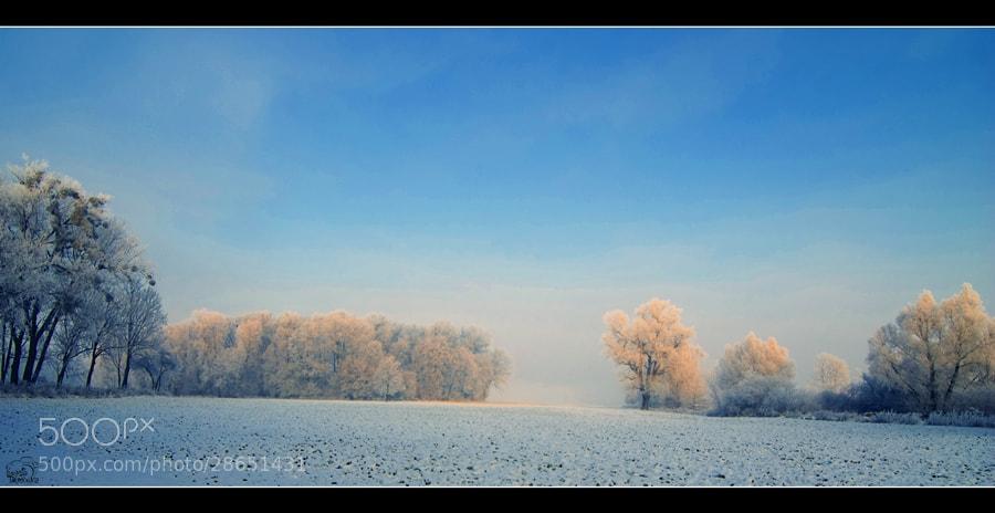 Photograph Winter field by Lukasz Dawidowicz on 500px