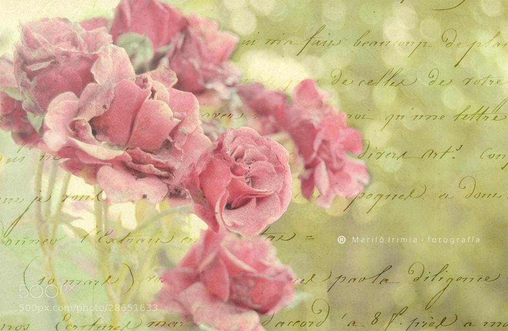 Photograph romantic roses ♥ rosas románticas by Mariló Irimia on 500px
