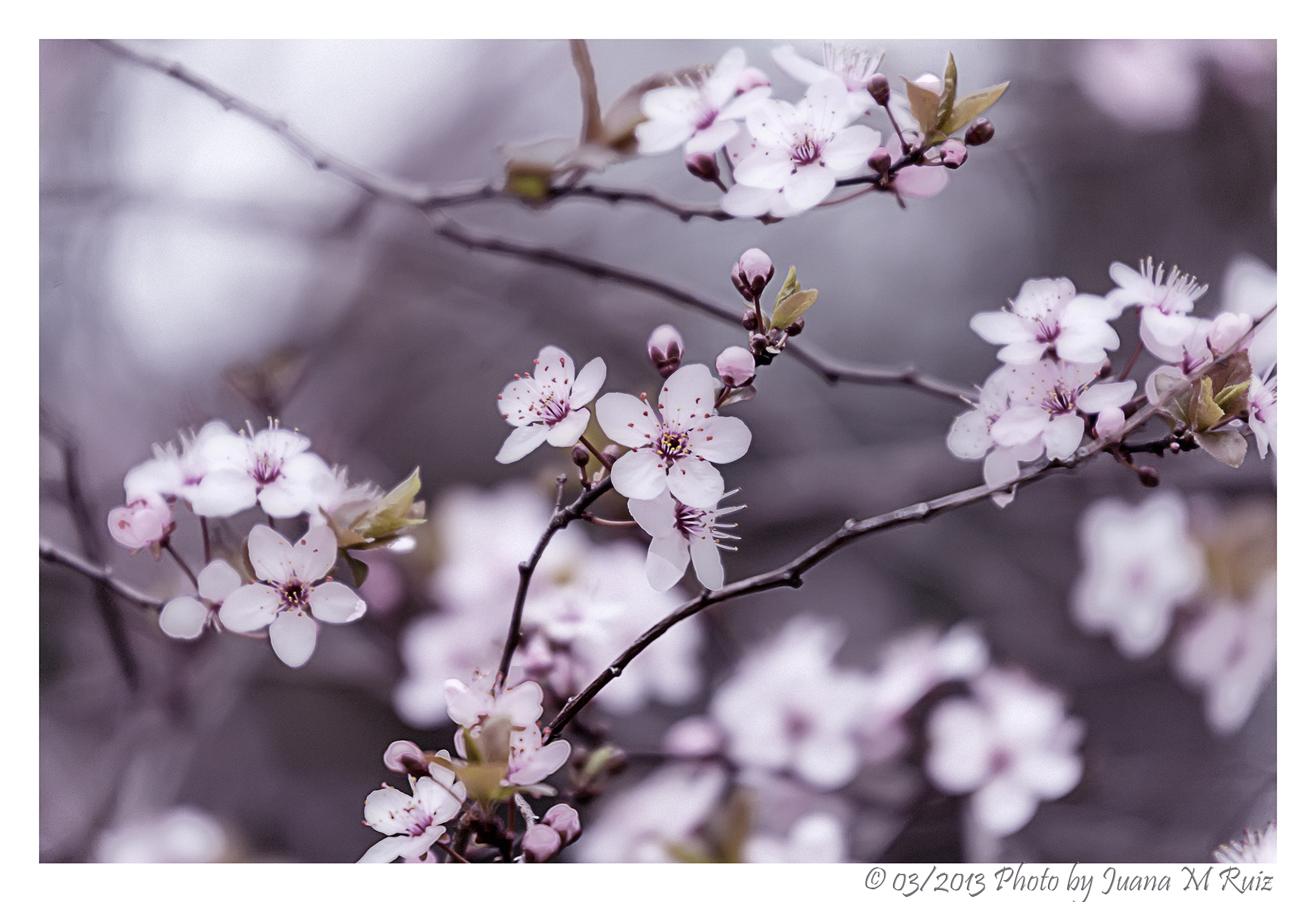 Photograph Spring by Juana Maria Ruiz on 500px