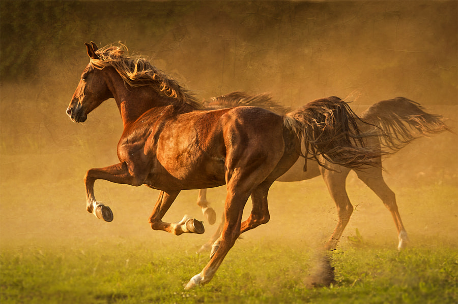 run by Mathias Ahrens on 500px.com