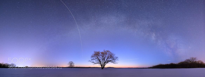 Photograph ハルニレの宇宙 by hirosima munetaka on 500px
