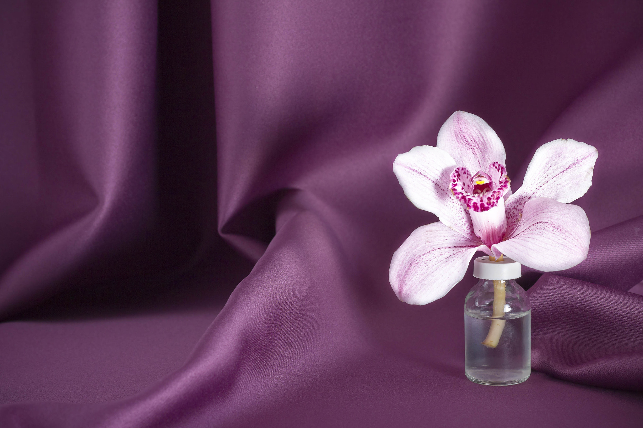 Photograph Orchid II by Cucu Andrei on 500px