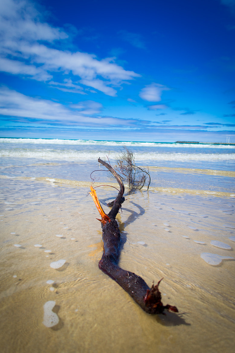 Photograph Driftwood by Sion Jones on 500px