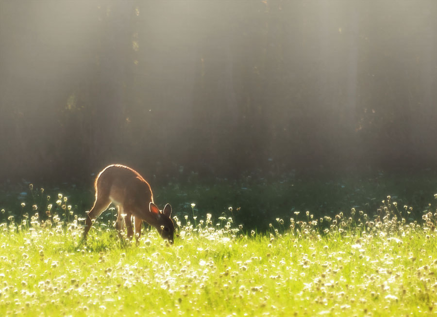 Photograph Fawn Feeding Time by Peter Baumgarten on 500px