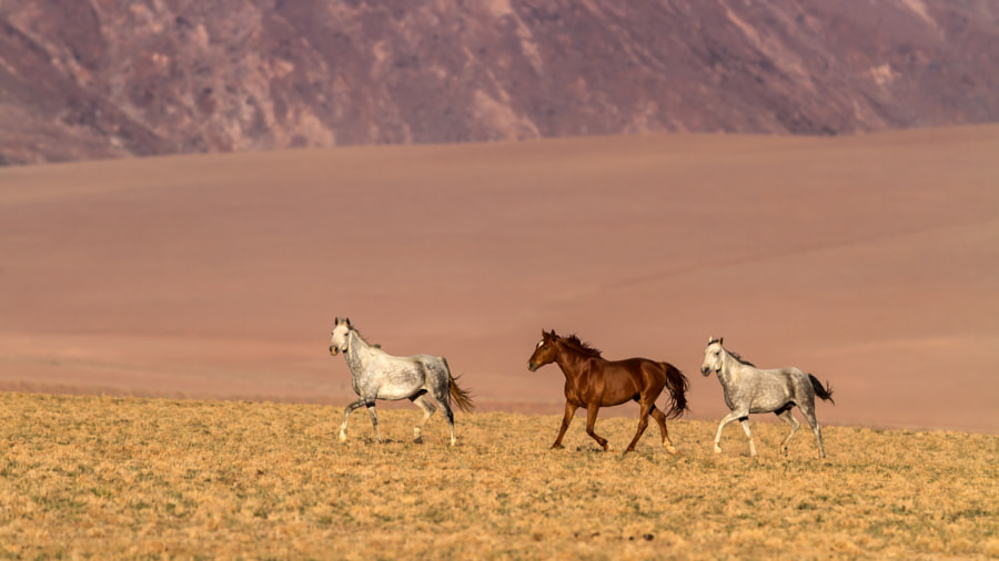 Namibian Horses by Michael Voss on 500px.com