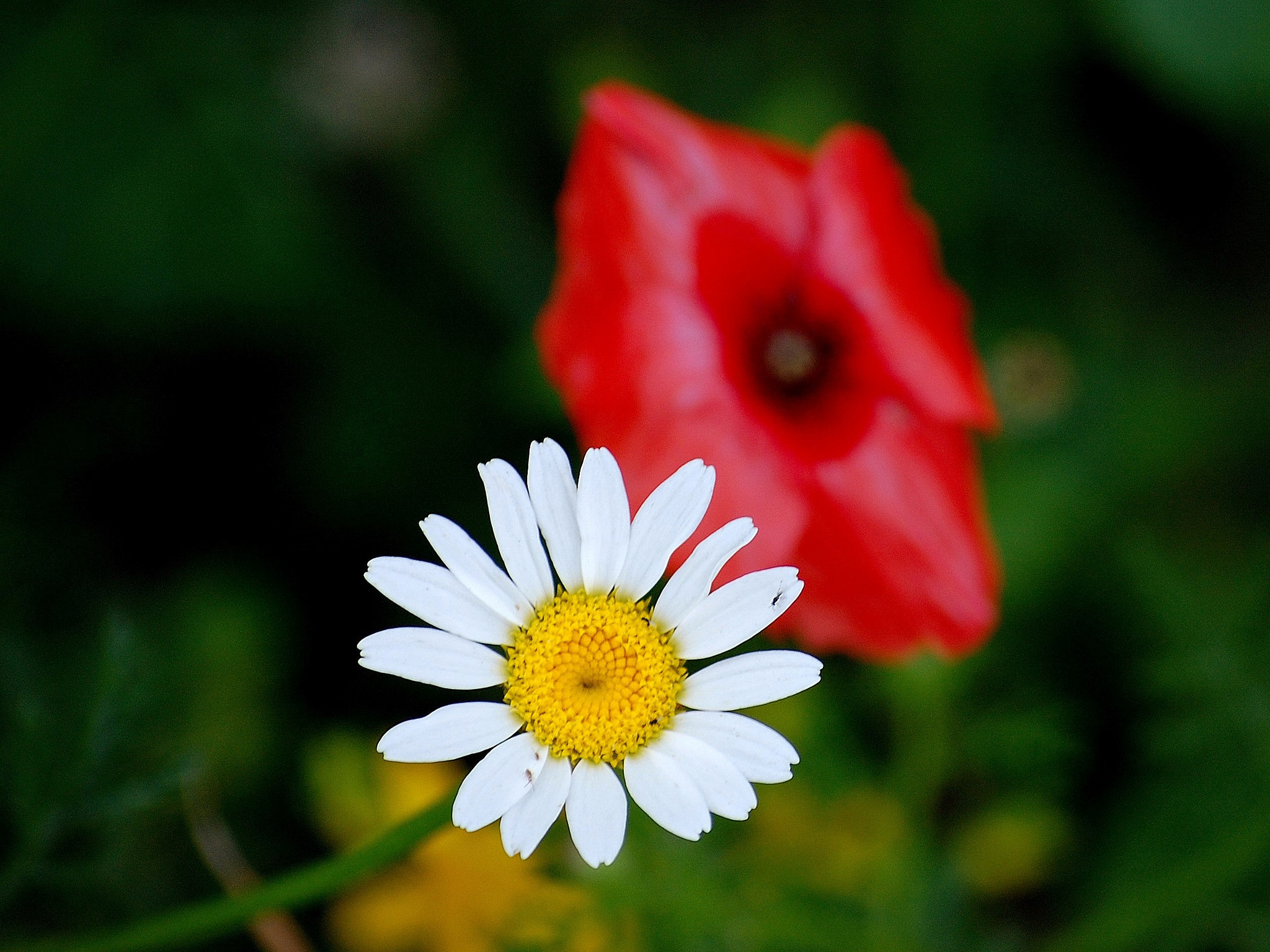 Photograph white, yellow, red and green by Andrea Macherelli Bianchini on 500px