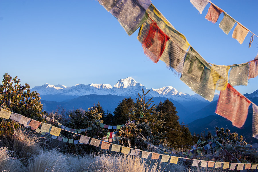 Mount Annapurna at dawn on Poon Hill in Nepal among prayful tags by Juliya Kirchenko on 500px.com