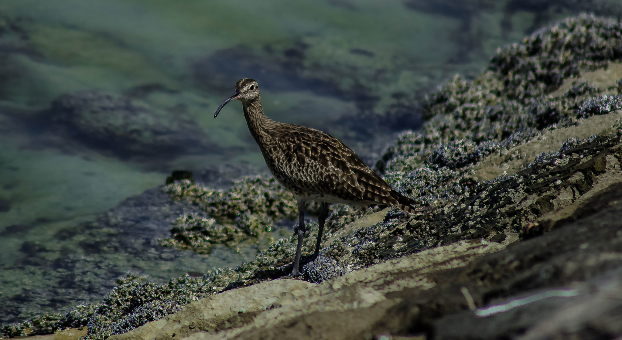 Photograph Curlew by julian john on 500px