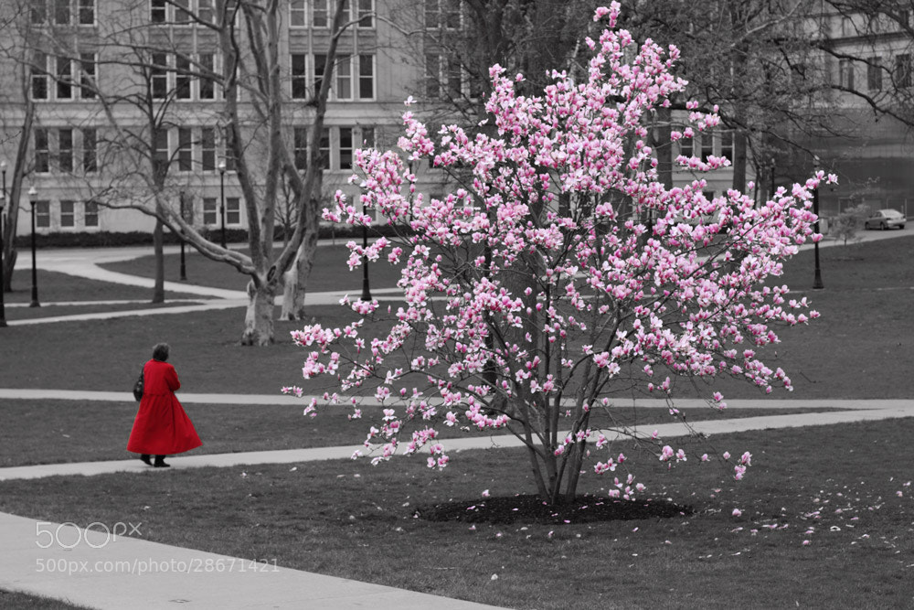 Photograph Lady in red by VO-Photography on 500px