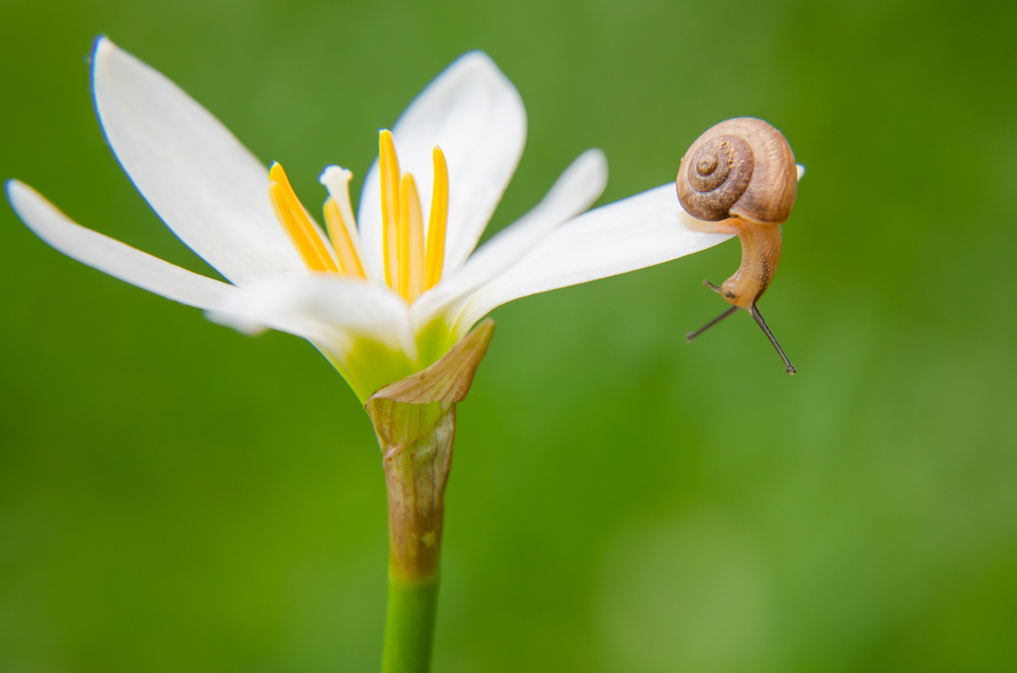 Photograph Snail by Mariana Ito on 500px